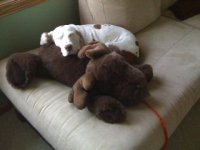Jessie sleeping with Moose.jpg