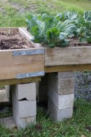 Raised bed2.jpg