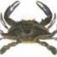 Crabbergirl