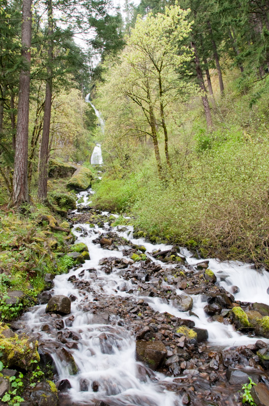 Wahkeenah Falls in the Columbia River Gorge, OR
