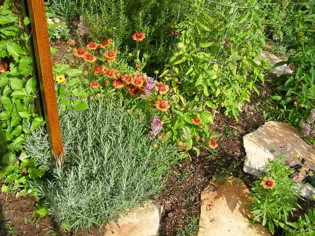 lavender and indian blanket