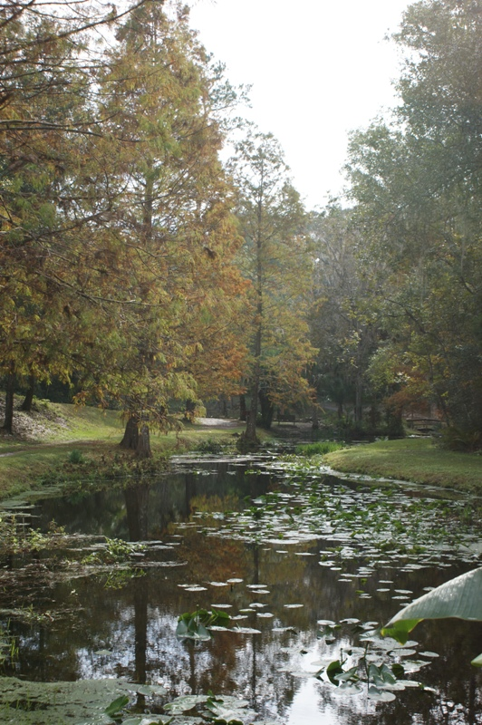 Ravine Gardens State Park Fall 09