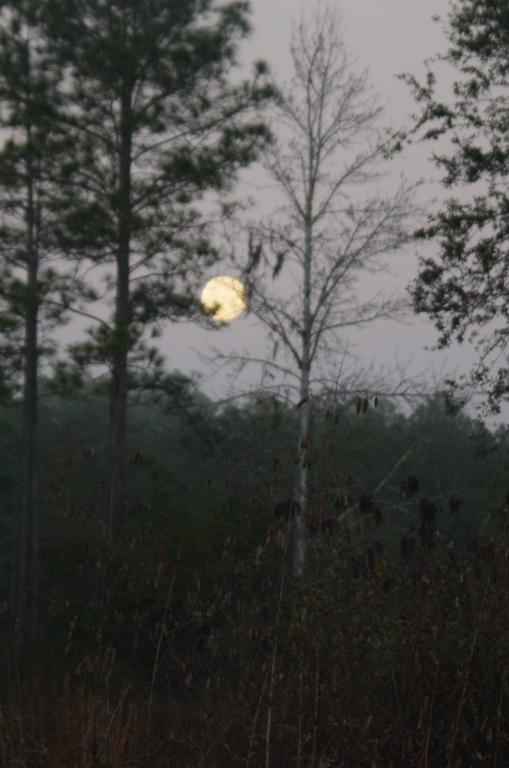 Winter Moon Set
