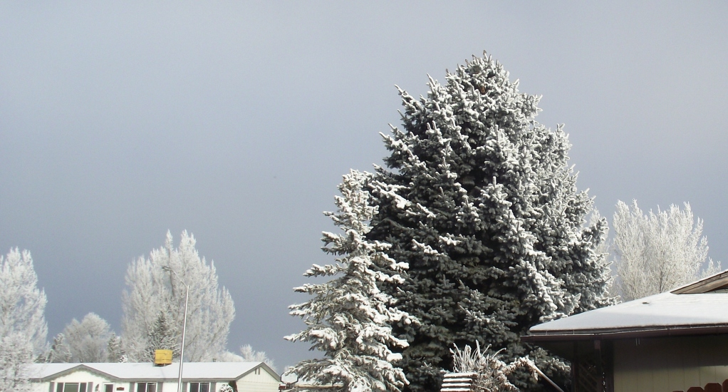 Dec 2010 - ice crystals followed a heavy fog in our area one morning. Made for a lovely view...