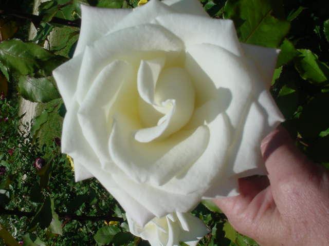 MOMS_FLOWERS_002