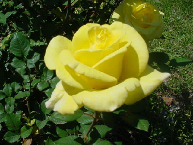 MOMS_FLOWERS_005