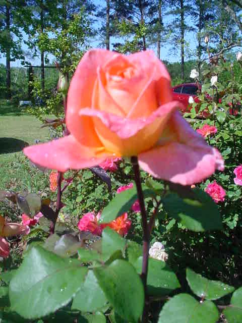 MOMS_FLOWERS_003