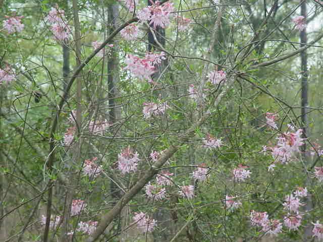 MOMS FLOWERS 001