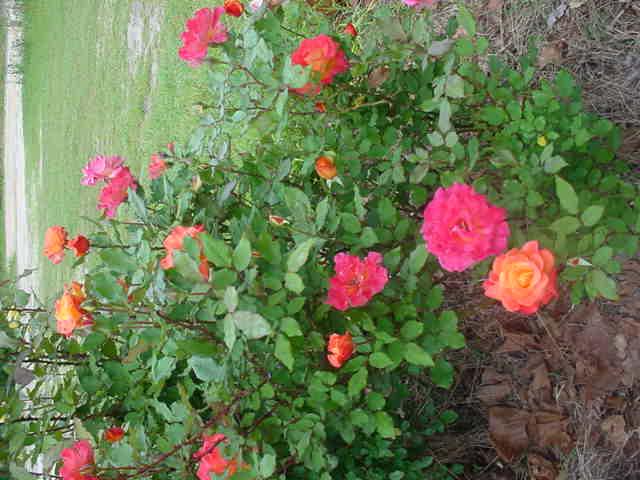 Mom_s_flowers_008