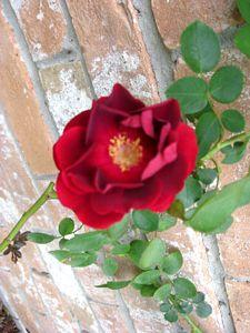 tn_Spring blooms 09 002