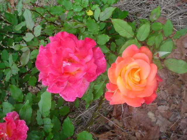 Mom_s_flowers_009