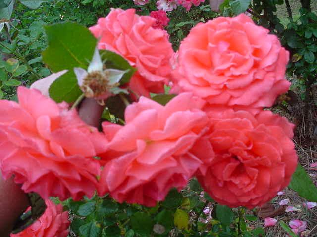 MOMS_FLOWERS_0061