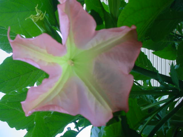 MOMS FLOWERS 029
