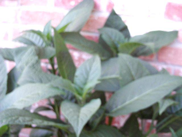 tn_gardening017