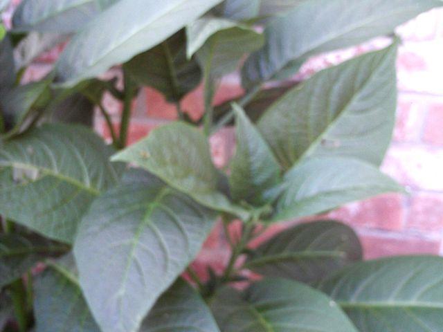 tn_gardening018