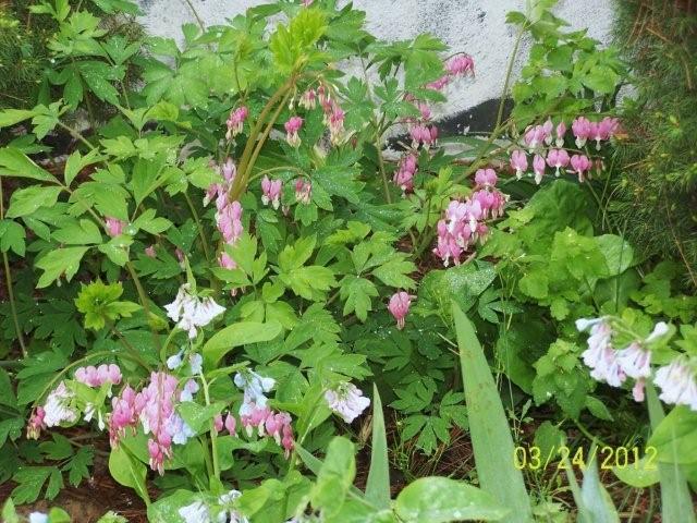 3-25-12flowers016