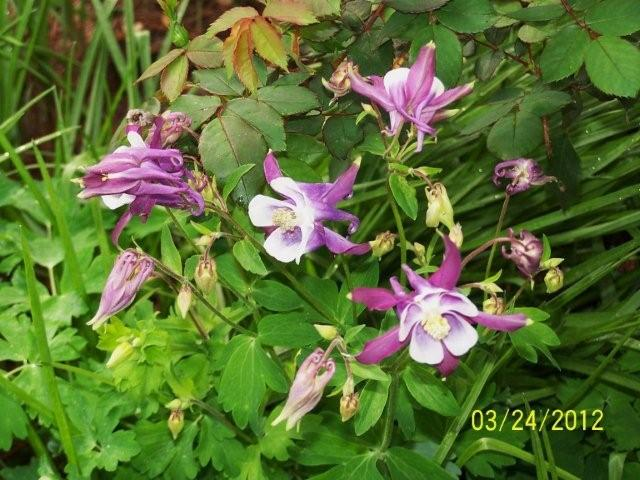 3-25-12flowers035