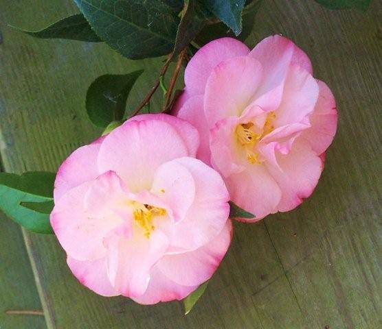 Flowers3-2-12018[1]