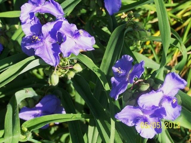 Flowers5-6-12003[1]
