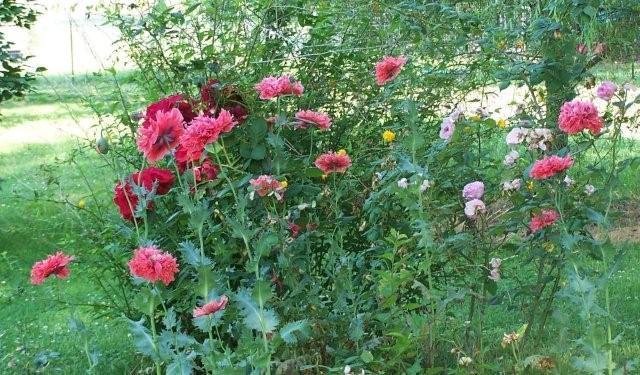 Flowers5-6-12004[1]