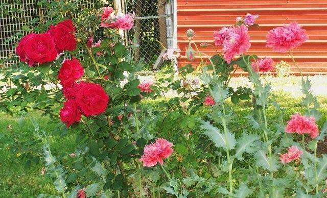 Flowers5-6-12005[1]