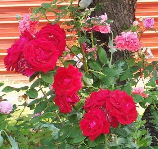 Flowers5-6-12006[1]