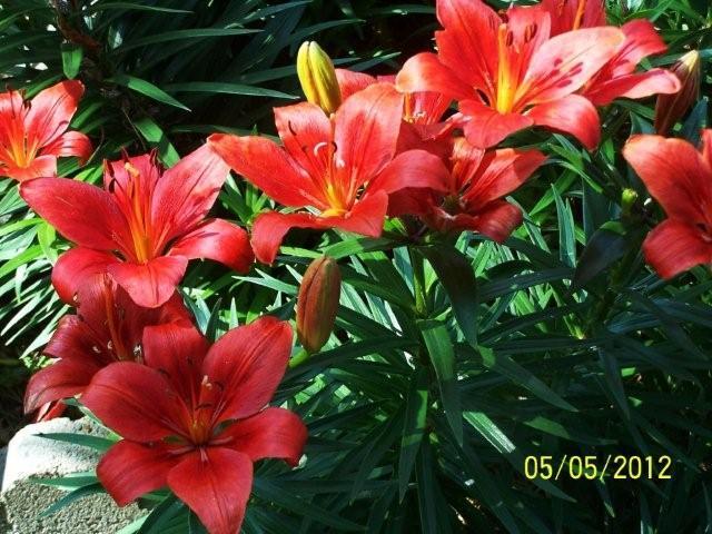 Flowers5-6-12008[1]