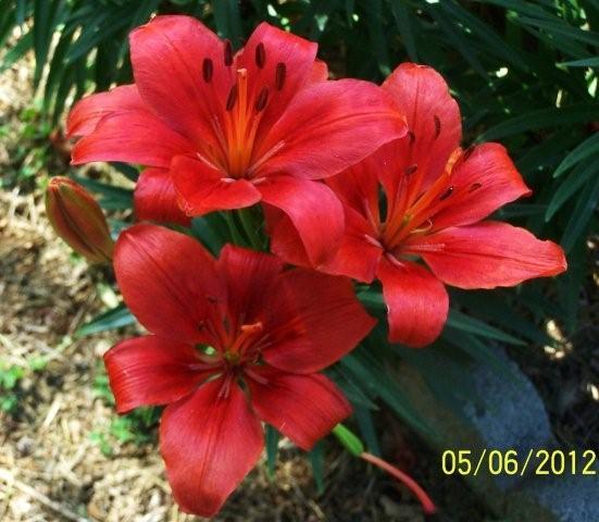 Flowers5-6-12009[1]