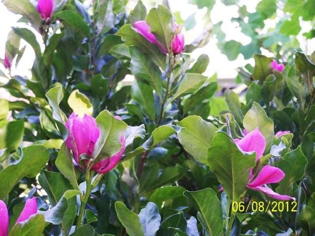Flowers6-7-12052[1]
