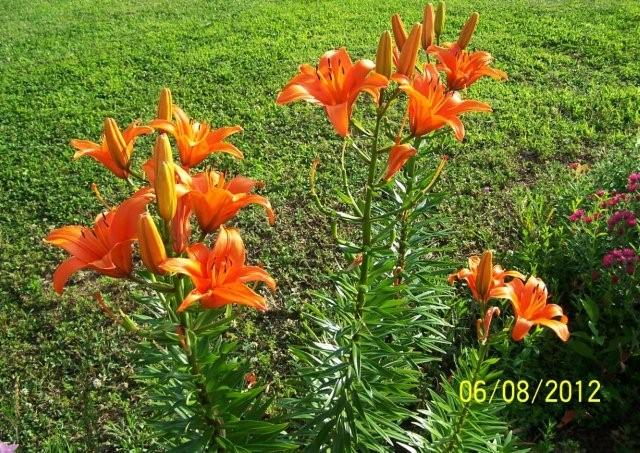 Flowers6-7-12043[1]
