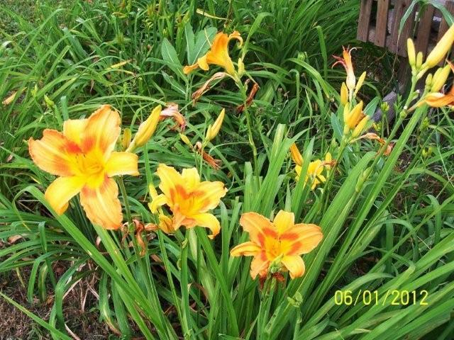 Flowers6-7-12018[1]
