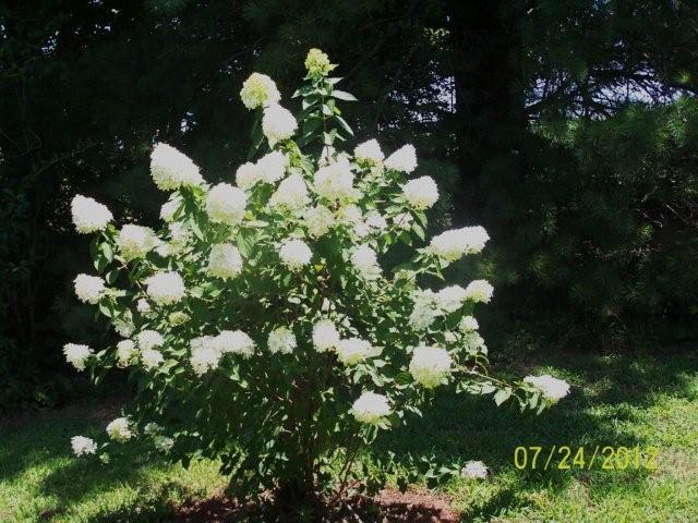 Flowers7-24-12006