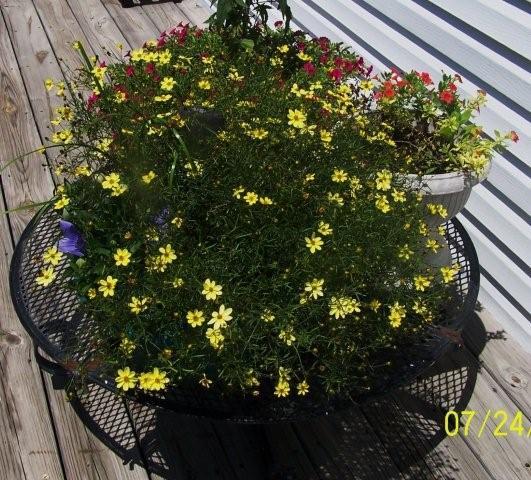 Flowers7-24-12010