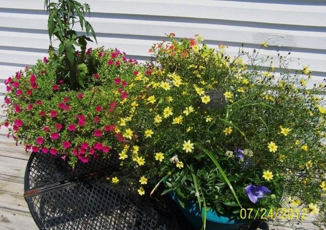 Flowers7-24-12011