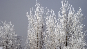 Early frosty morn in Elko