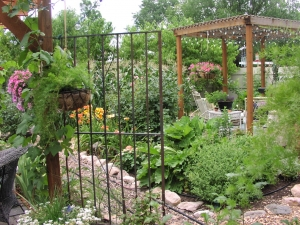 Garden Path Between Grape Arbor and Herb Bed