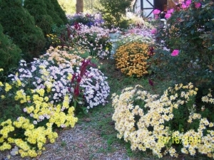 Show us your Autumn 2011 flowers!