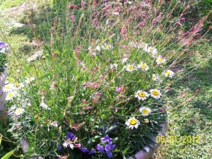Pot of perennials