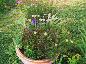 Pot of perennials 2